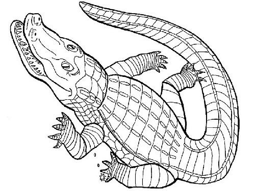 Krokodyl Chnapi