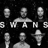 swans-585079.jpg