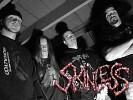 skinless-496892.jpg