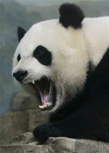 PandaMonster
