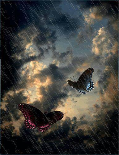 I když déšť smáčí naše křídla ...i když bouřka přichází ...nesmíme se vzdát ...musíme zůstat spolu ...my dva poslední pozůstalí ...dva poslední motýlí tuláci ...slabí a přec tak silní v křídlech ...